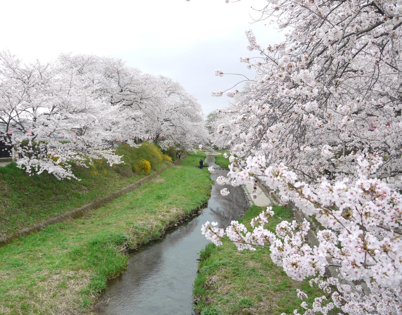 平成の名水百選に選ばれた川沿いをそぞろ歩き