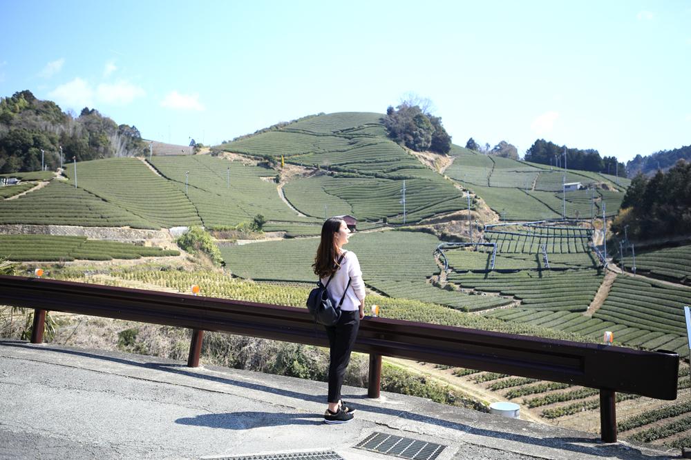 一番有名な「石寺の茶畑」はマスト!