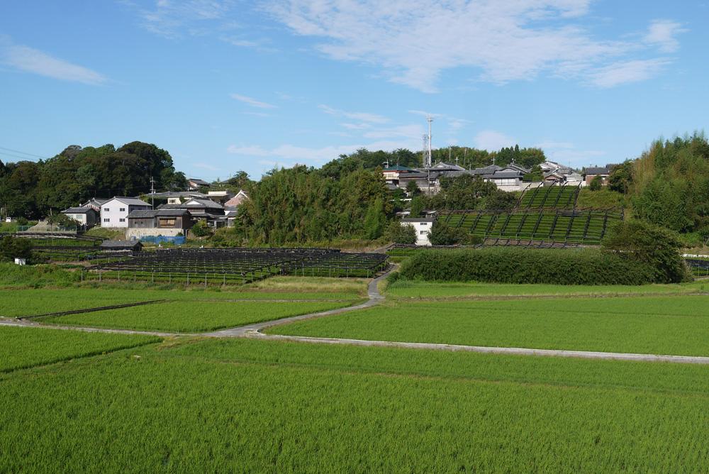 飯岡(いのおか)の茶畑