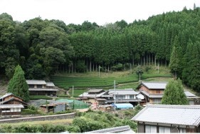 湯船の茶畑