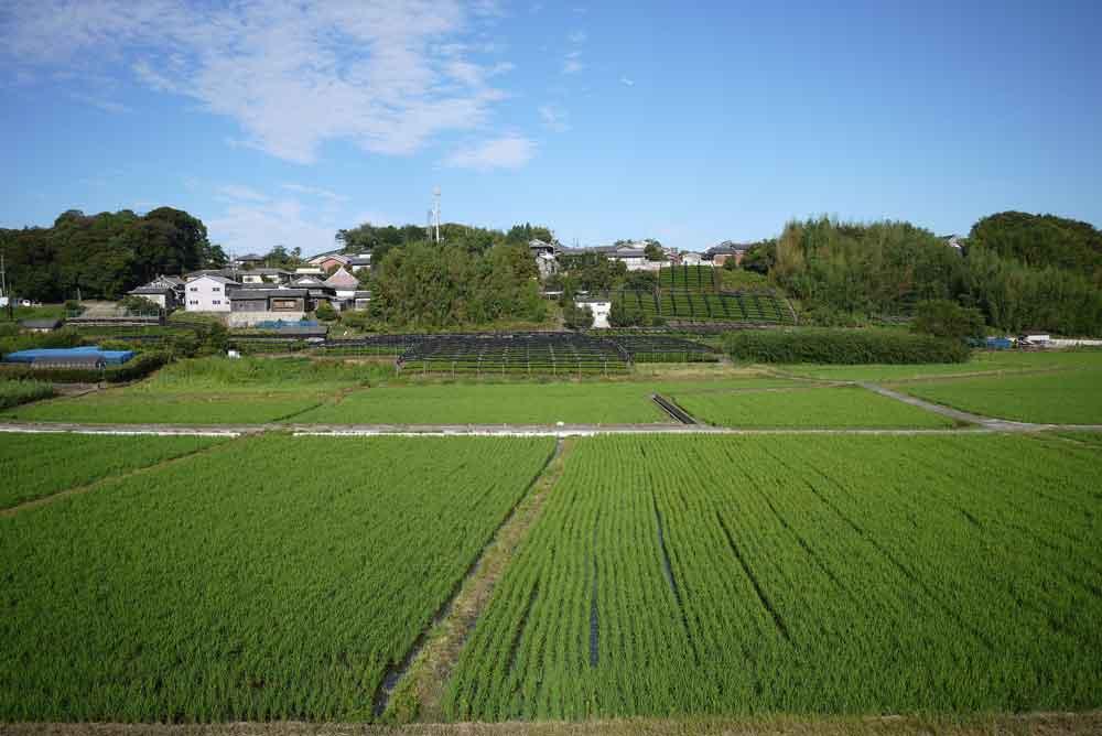 飯岡の茶畑