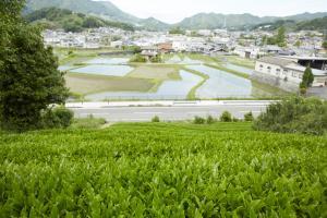 和束茶畑1