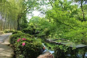 松花堂庭園:青もみじ1