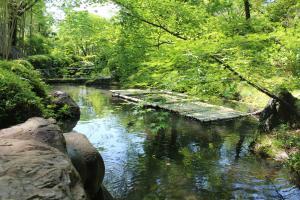 松花堂庭園:青もみじ2