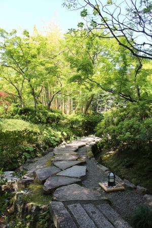松花堂庭園:青もみじ3