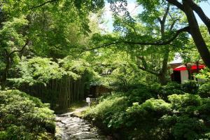 松花堂庭園:青もみじ5