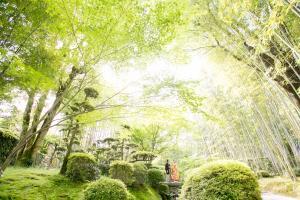 松花堂庭園:青もみじ6