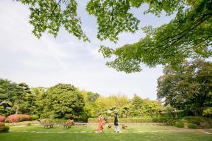 松花堂庭園:青もみじ7
