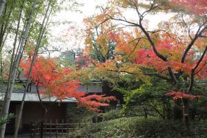 松花堂庭園:秋3