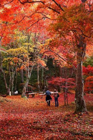 もみじ公園3